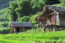 Eco-Palms-House-homestay